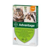 Advantage rácsepegtető oldat kistestű (4kg alatt) macskáknak és nyulaknak A.U.V. (4x0,4ml)