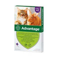 Advantage rácsepegtető oldat nagytestű (4-8kg) macskáknak és nyulaknak A.U.V. (4x0,8ml)
