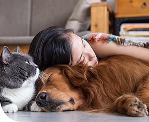 Milyen betegségeket hordozhatnak az állatok?