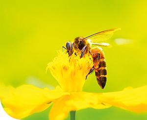 Tisztelet a méheknek!